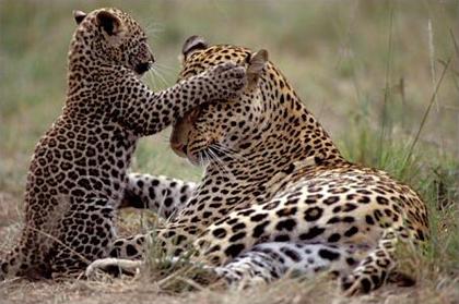 Atajos enLeopard