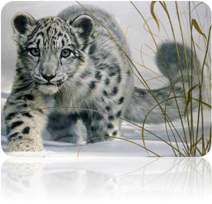 Mac OS X 10.6 Snow Leopard va cogiendo forma